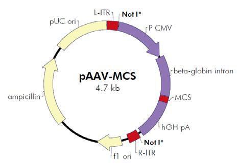 AAV Helper-Free System腺相关病毒系统